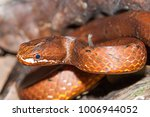 snake in forest  wild animals | Shutterstock . vector #1006944052