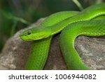 snake in forest  wild animals | Shutterstock . vector #1006944082