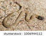snake in forest  wild animals | Shutterstock . vector #1006944112