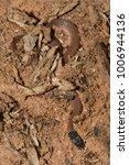 snake in forest  wild animals | Shutterstock . vector #1006944136