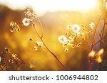 wild meadow dandelion beautiful ... | Shutterstock . vector #1006944802