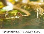 snake wild animals | Shutterstock . vector #1006945192