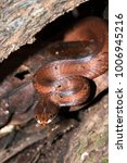 snake wild animals | Shutterstock . vector #1006945216