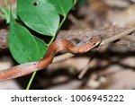 snake wild animals | Shutterstock . vector #1006945222