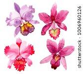 wildflower pink orchid flower... | Shutterstock . vector #1006960126