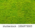 Green Moss Texture  Background