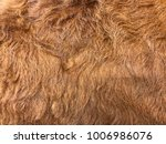 cowskin is used for animal... | Shutterstock . vector #1006986076
