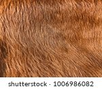 cowskin is used for animal... | Shutterstock . vector #1006986082