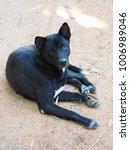 animal  life  black | Shutterstock . vector #1006989046