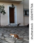 cats in plaka   district of...   Shutterstock . vector #1006995766