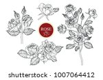 collection roses with line art... | Shutterstock .eps vector #1007064412