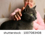 Stock photo big old cat sitting on elderly woman s lap senior lady pets her blue russian kitty grandmother 1007083408