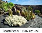 cactus garden jardin de cactus  ...   Shutterstock . vector #1007124022