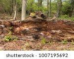 Decaying Tree Trunk In Woodlan...