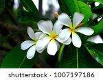close up  beautiful flower | Shutterstock . vector #1007197186