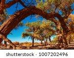 beautiful autumn landscape... | Shutterstock . vector #1007202496