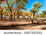 beautiful autumn landscape... | Shutterstock . vector #1007202532