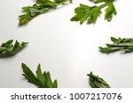 mugwort leaves on white... | Shutterstock . vector #1007217076
