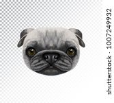 vector illustrated face of pug... | Shutterstock .eps vector #1007249932