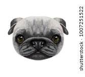 illustrated face of pug dog.... | Shutterstock . vector #1007251522