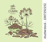 zira  cumin  plant and cumin... | Shutterstock .eps vector #1007252152