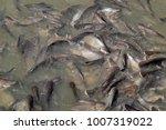 iridescent shark  striped... | Shutterstock . vector #1007319022