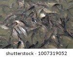iridescent shark  striped... | Shutterstock . vector #1007319052