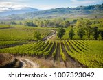 colorful panoramic view in... | Shutterstock . vector #1007323042