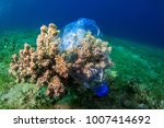 plastic bottle on coral reef | Shutterstock . vector #1007414692