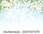 vector blossoming branches of... | Shutterstock .eps vector #1007437375