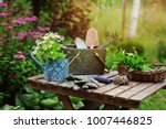 garden work still life in... | Shutterstock . vector #1007446825