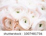 beautiful tender pink...   Shutterstock . vector #1007481736