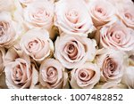 Stock photo pastel pink roses texture top view close up 1007482852