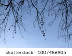 Bare Tree Branches Against...