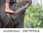 elephants asian close up   Shutterstock . vector #1007499316