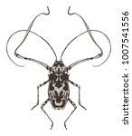 harlequin beetle insect... | Shutterstock .eps vector #1007541556