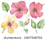 watercolor illustration flower... | Shutterstock . vector #1007548702