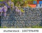 wisteria blossom on gabion... | Shutterstock . vector #1007596498