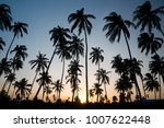 silhouette of tropical palm... | Shutterstock . vector #1007622448