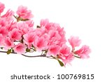 Pink Azalea Branch Isolated On...