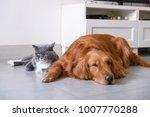 golden retriever and cat | Shutterstock . vector #1007770288