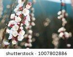 spring almond flowers    Shutterstock . vector #1007802886