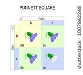 punnett square. genetics.... | Shutterstock . vector #1007862268