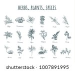 herbs  plants and spices vector ... | Shutterstock .eps vector #1007891995