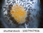 ants crowded around sweet spot... | Shutterstock . vector #1007947906