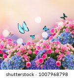 Stock photo garden wiht fresh pink roses and blue hortenzia flowers and butterflies on pink bokeh background 1007968798