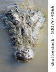 Small photo of American crocodile in the Tarcoles River in Costa Rica