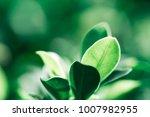 closeup nature view of dark... | Shutterstock . vector #1007982955
