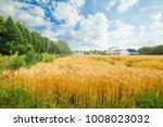 Small photo of Wheat wheat field wheat field