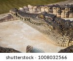 crocodile saltwater thailand | Shutterstock . vector #1008032566